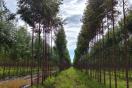 해외산림자원개발에 투자하실 사업자분들! 정책자금 신청하세요