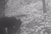 덕유산 일대에도 반달가슴곰이 산다