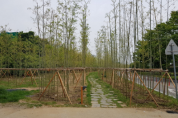 대나무‧미루나무…서울시, '5개 한강숲 조성' 미세먼지 잡고 쉼터 확충