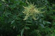 국립수목원, 독성식물의 신 기능성 발굴