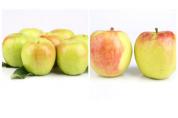 새콤달콤 여름 사과 '썸머킹·썸머프린스' 맛볼까?