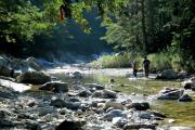 7월 국유림 명품숲에 '인제 아침가리 숲' 선정